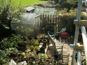 My greenhouse... hoping it will breed with next-door's