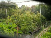 The fruit cage