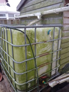 The IBC, collecting water from the shed roof and now raised up on a couple of pallets