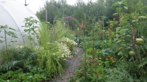 Vegetables and herbs in abundance