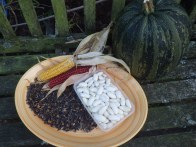 Beans and seeds for drying