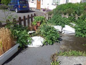 Potatoes in dumpy bags in the 'waste of space' corner