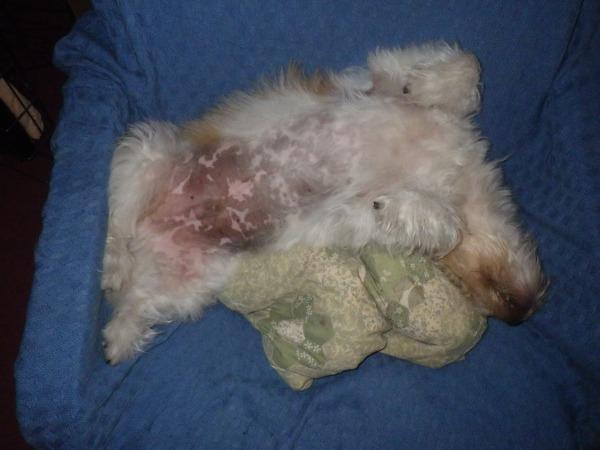 Maxwell: my relaxation guru