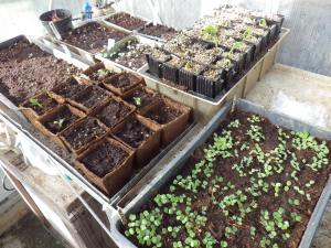 All sorts of seeds have germinated now