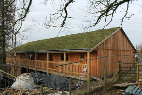 new green roof