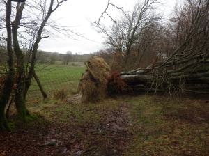 Fallen trees and storm damage kept me busy for half a day this week
