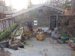 Container gardening in a yard