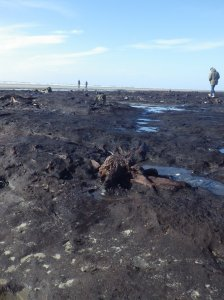 Tree stumps emerge from the peat