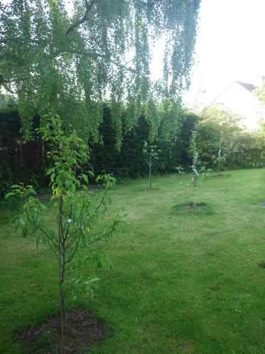 Fruit trees newly planted in front of the house