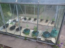 The greenhouse restored