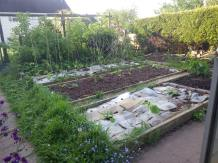 The veg plot