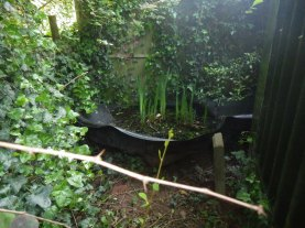 Relocated pond... all the newts are safe
