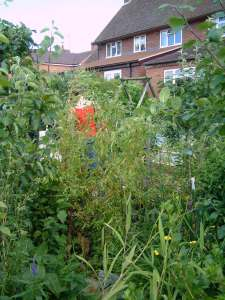 Such abundance in a garden behind a semi-detached ex-council house