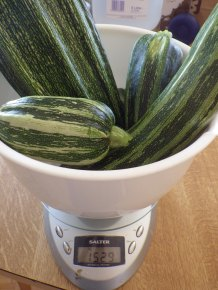 Yesterday's courgette harvest