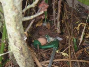 Grabbing the egg