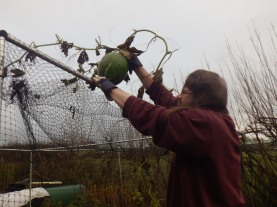 Extracting the one from the top of the fruit cage