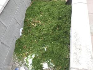 Grass clippings on top