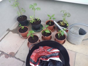 Potting up... very late in the season