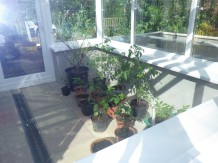 Keeping the plants (including the lime) off the sills until the sealant dries
