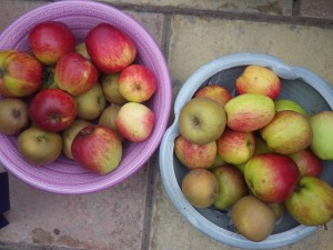 An abundance of eating apples