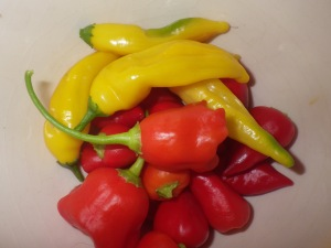 Part of the chilli harvest