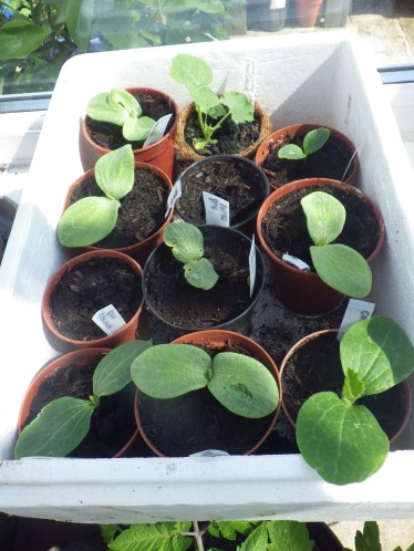 More curcurbits