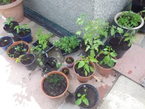 Lots of plants potted up