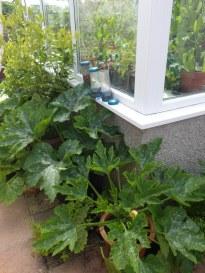 Plants on the outside