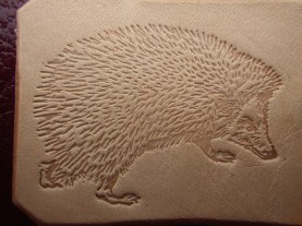 hedgie detail