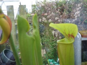 New pitchers