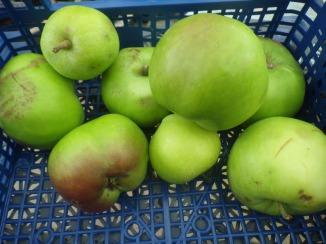 Moma Snail's apples