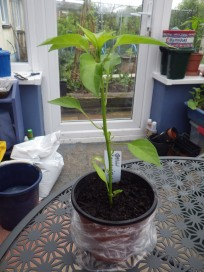 10 plants rehomed 4